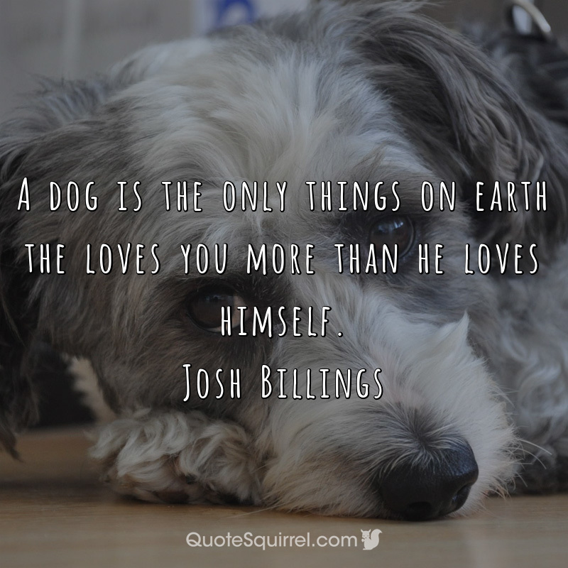 A dog is the only things on earth the loves you more than he loves