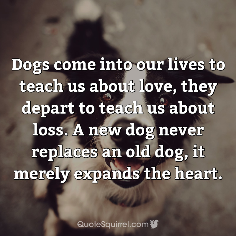 Dogs come into our lives to teach us about love, they depart to teach us