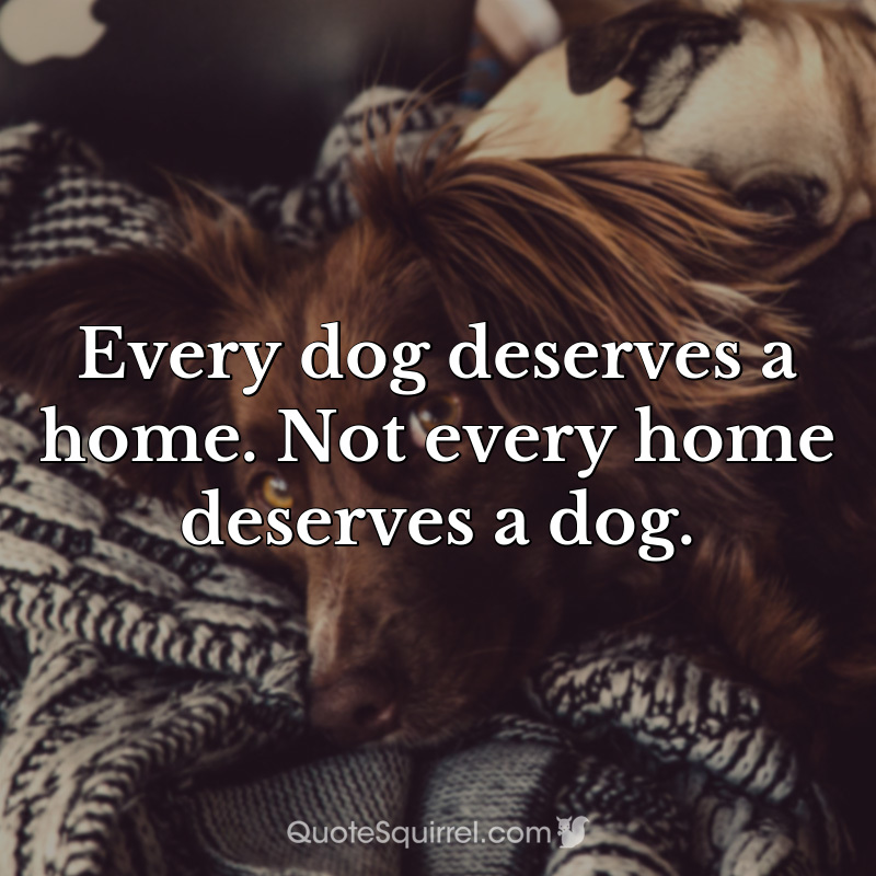 Every dog deserves a home. Not every home deserves a dog