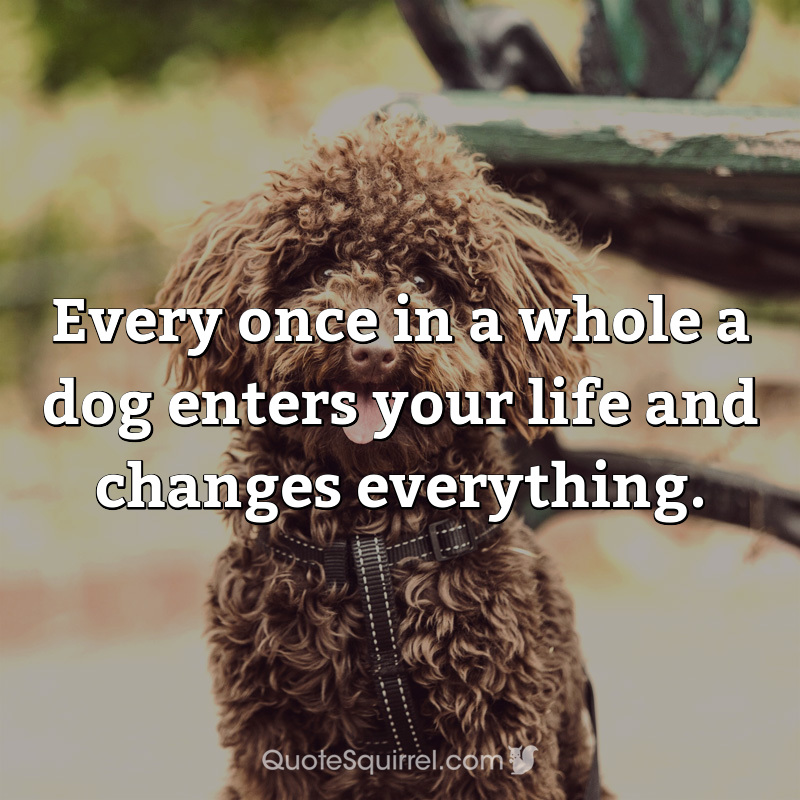 Every once in a whole a dog enters your life and changes everything