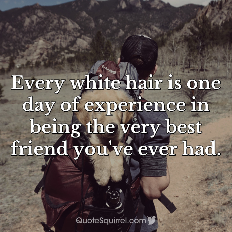 Every white hair is one day of experience in being the very best friend