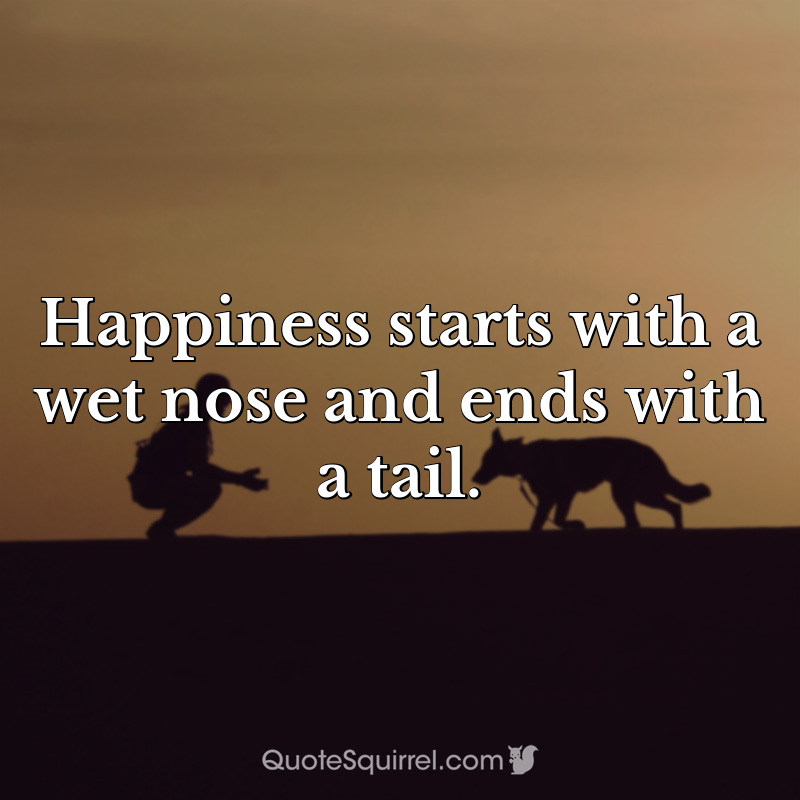 Happiness starts with a wet nose and ends with a tail