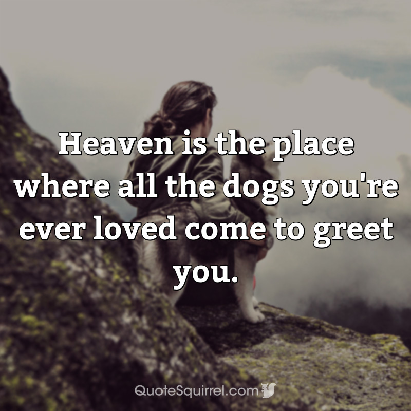 Heaven is the place where all the dogs you're ever loved come to greet