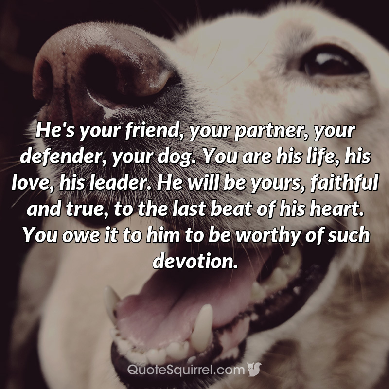 He's your friend, your partner, your defender, your dog. You are his