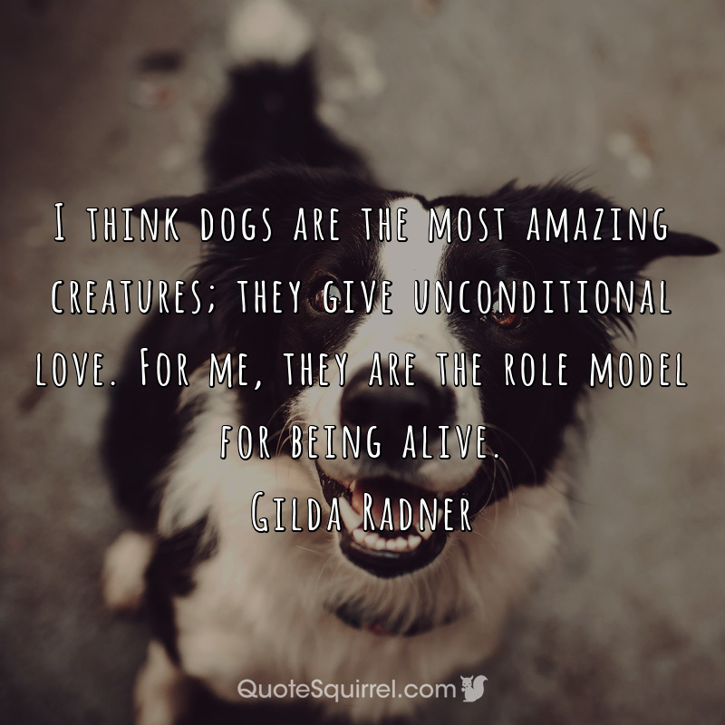 I think dogs are the most amazing creatures; they give unconditional