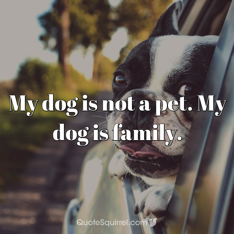My dog is not a pet. My dog is family