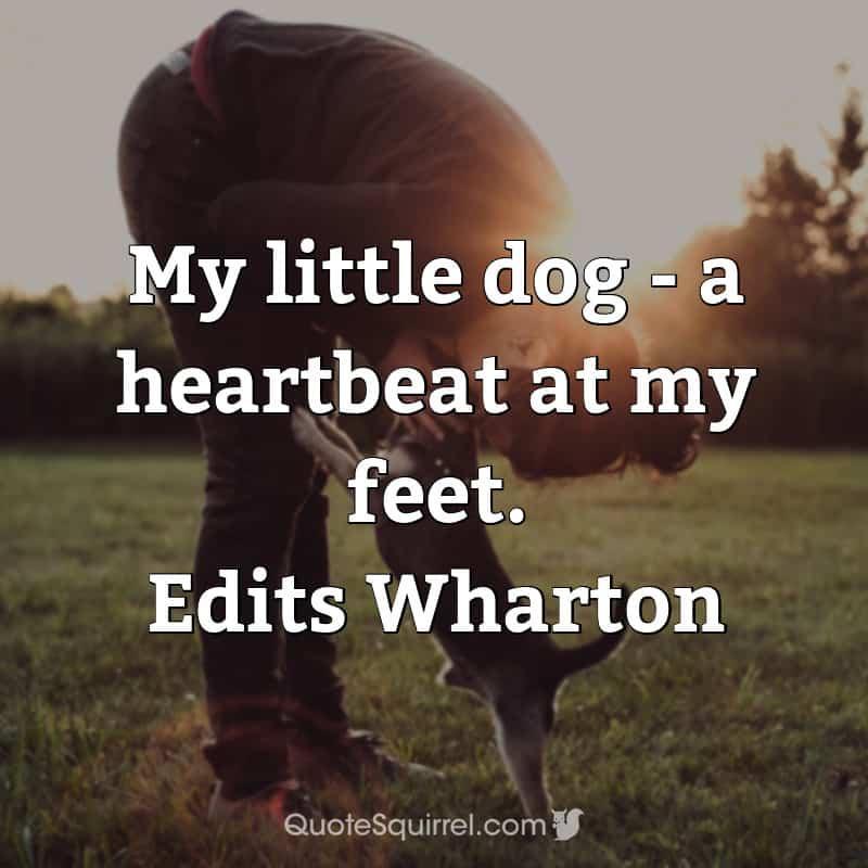 My little dog – a heartbeat at my feet