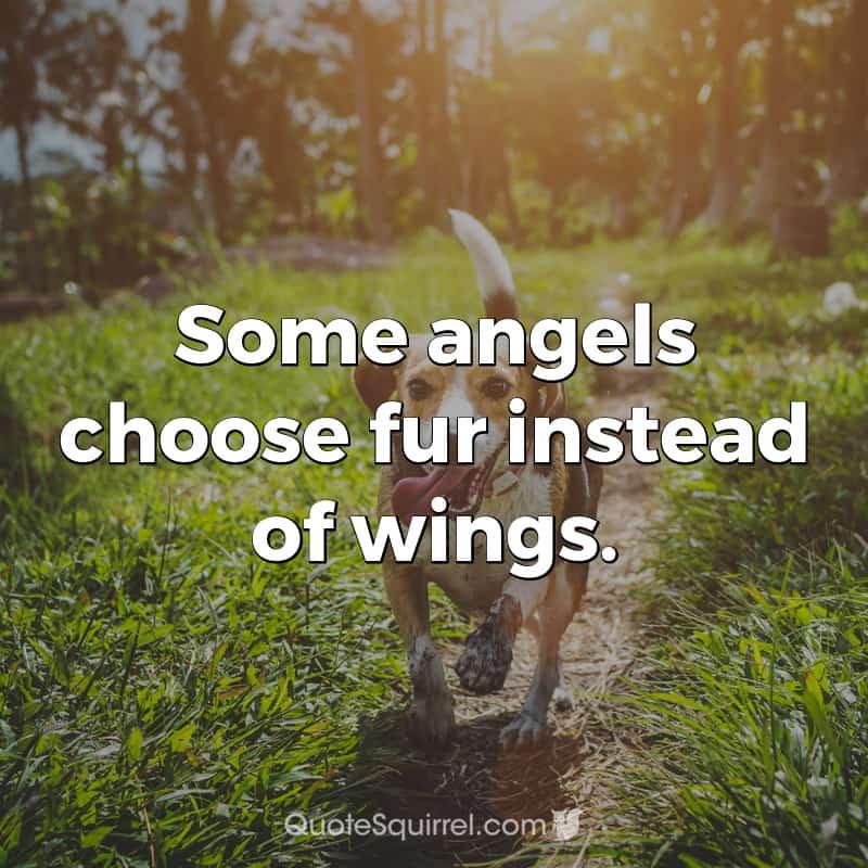 Some angels choose fur instead of wings