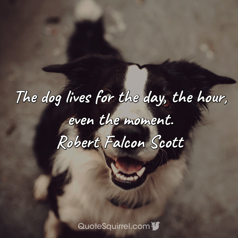 The dog lives for the day, the hour, even the moment