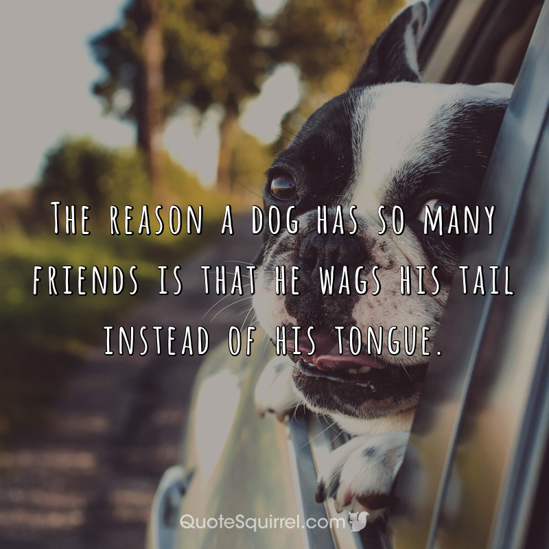 The reason a dog has so many friends is that he wags his tail instead of