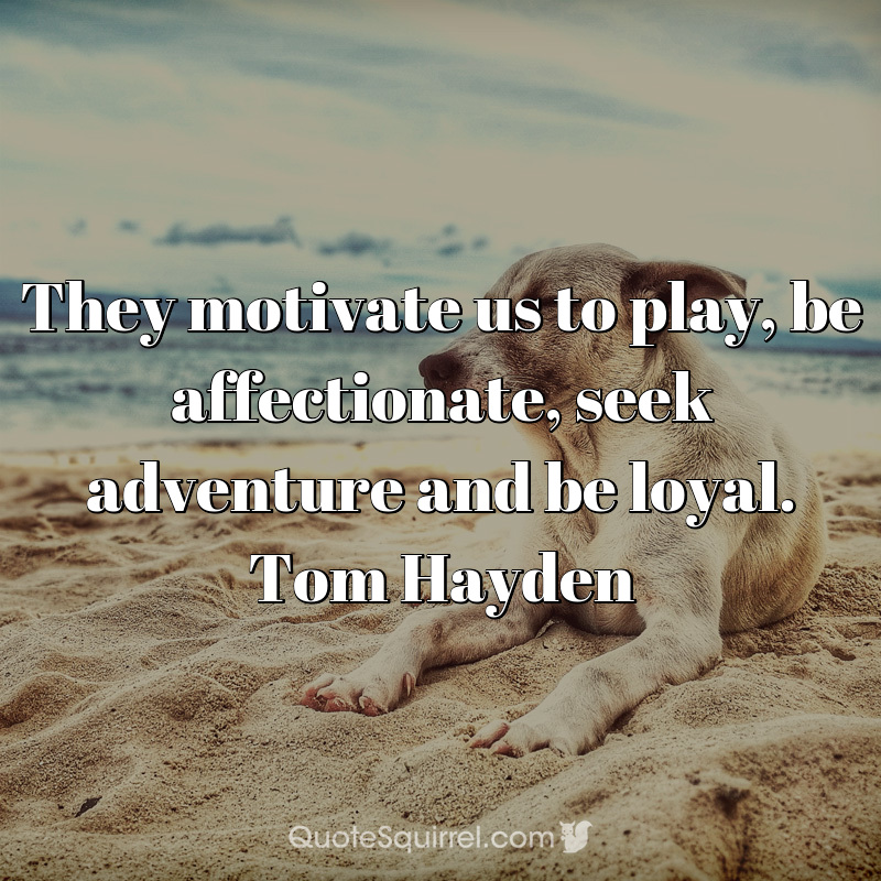 They motivate us to play, be affectionate, seek adventure and be loyal