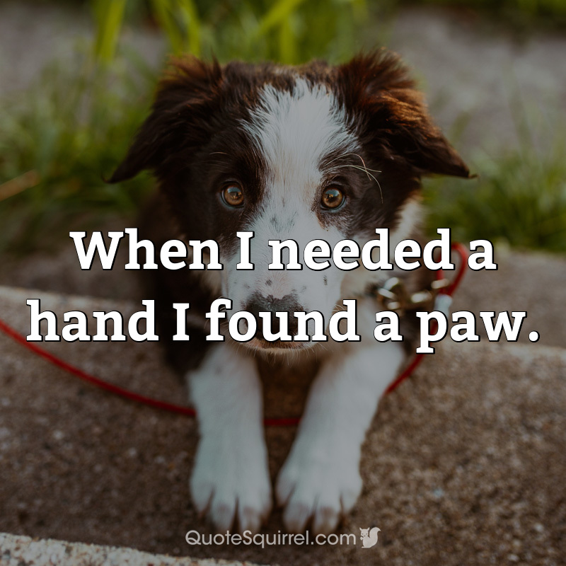 When I needed a hand I found a paw
