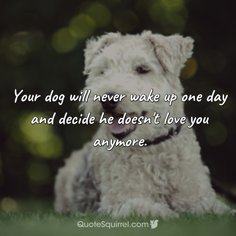 Your dog will never wake up one day and decide he doesn't love you